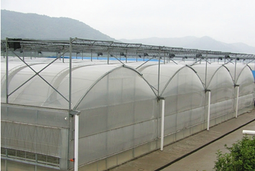 塑料膜连栋温室