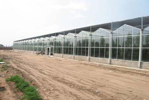 玻璃连栋温室